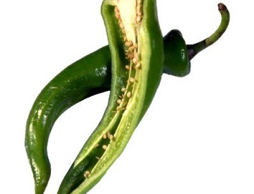 Pasilla Chili Seeds (10 seeds)