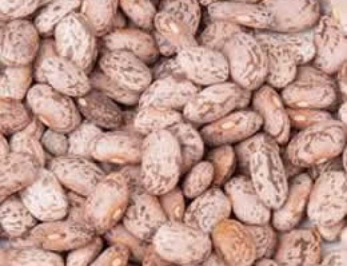 Whole dried pinto Beans 25kg